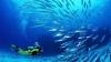 EXPERIENŢĂ INCREDIBILĂ! Un scafandru înoată între două continente (VIDEO)