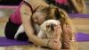 Nou record stabilit în Hong Kong! Zeci de oamenii alături de câinii lor au participat la o şedinţă de yoga
