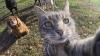 Mania selfie-urilor a cuprins şi felinele. Un motan din Australia a învăţat să-şi facă singur poze