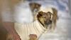 Exemplu de dragoste de viaţă! Un câine cu dizabilităţi se distrează de minune pe o pârtie (VIDEO)