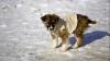 STUDIU: Câinii au capacitatea de a percepe emoțiile umane