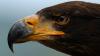 Locuitorii din Peru, monitorizaţi cu ochi de vultur! METODA INEDITĂ a autorităţilor în lupta cu gunoaiele