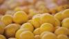 E vremea citricelor! Idei ingenioase pentru a folosi cojile de portocale