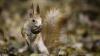 (VIDEO VIRAL) O veveriță însetată a cerut apă din sticla unui copil