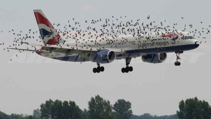 NO COMMENT: Ce se întâmplă când o pasăre se ciocneşte de un avion