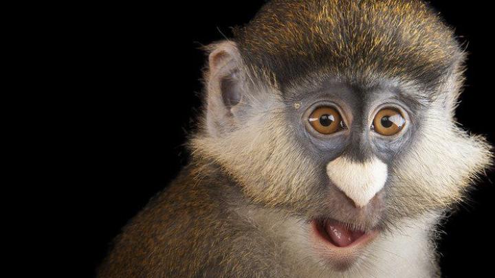 Senzaţional! Vrea să fotografieze 12.000 de specii de animale înainte ca acestea să dispară