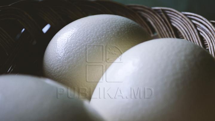 O ţară din Europa vrea interzicerea unui anumit tip de ouă de găină