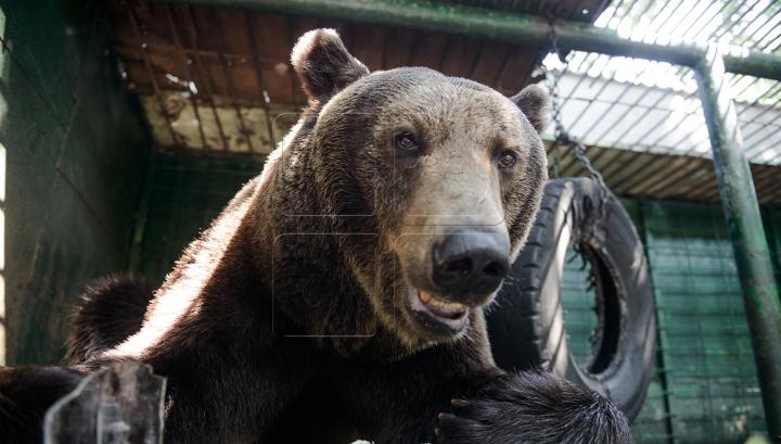 Imagini care te ţin în suspans. Cum se joacă un bărbat cu un urs la grădina zoologică (VIDEO)