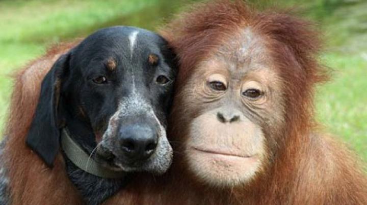 Prietenie fără bariere. O maimuţă şi un căţeluş din India sunt de nedespărţit (FOTO)