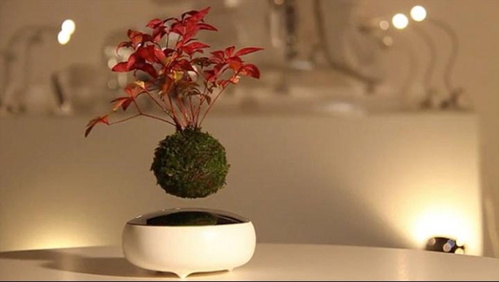 Japonezii revoluționează știința: au creat bonsaiul plutitor (VIDEO)
