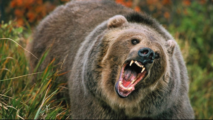 ÎNGROZITOR! Un bărbat, atacat de urs în timp ce tăia lemne. Cine l-a salvat din ghearele fiarei