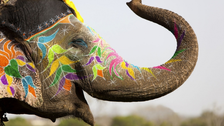 PRĂPĂD! Ce a făcut un elefant pe străzile unui oraș din India atunci când a fost ENERVAT LA CULME (VIDEO)