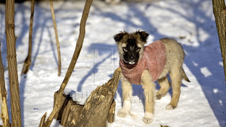 Nu doar oamenilor le place iarna. Cum se distrează animalele în zăpadă (FOTO)
