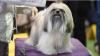 Coafați și talentați. Mii de câini au defilat pe podium la New York