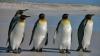 Fenomen GRAV și trist! Sute de pinguini au murit într-o regiune din Antarctica (VIDEO)