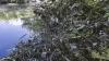 Raionul Glodeni, în pragul unui DEZASTRU ECOLOGIC din cauza apelor reziduale de la o fabrică de zahăr