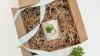 Adevărate bijuterii naturale! O americană a creat accesorii cu plante vii (FOTO)