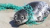 Proiect INEDIT. Un tânăr a propus o nouă metodă de curăţare a oceanelor de deșeuri