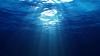 Prevestește Apocalipsa! Vietatea acvatică care A ÎNGROZIT OAMENII (FOTO)