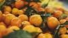 Alimente dulci indicate în perioada rece a anului. Citricele bogate în vitamina C