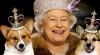 Atitudine regească! Cum sunt tratați câinii Reginei Elisabeta a II-a