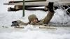 Un bărbat a căzut sub gheaţa unui lac din Chişinău! Pompierii au intervenit de urgenţă