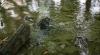 AVARIE la un apeduct din Bălţi. Un cartier a fost transformat într-un râu murdar (VIDEO)