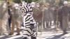 Antrenament distractiv. Angajaţii de la zoo se deghizează în animale sălbatice (VIDEO)