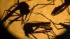 Virusul Zika a ajuns în Rusia. Medicii dau asigurări că boala nu se va răspândi