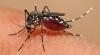 Acum şi în Australia. O gravidă a fost testată pozitiv la virusul Zika