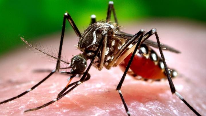 Costa Rica utilizează o bacterie pentru a ucide larvele țânțarului care transmite virusul Zika