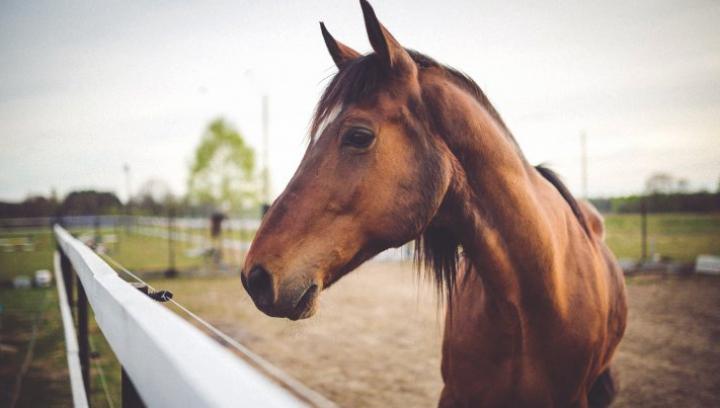 FASCINANT: Și-a dresat caii până au ajuns să facă asta (VIDEO)