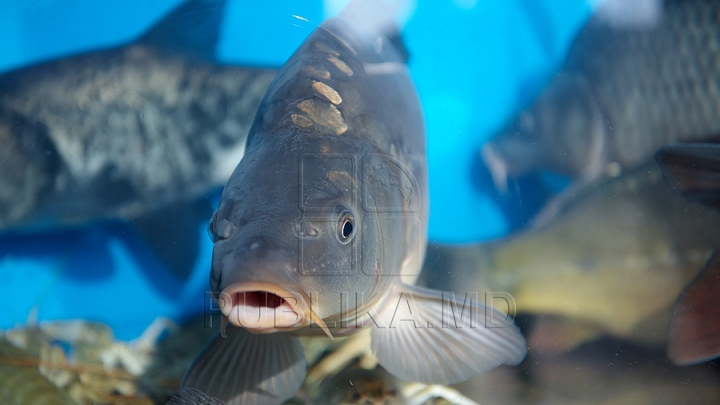 ESTE BINE SĂ ȘTII! Alimentaţia bogată în peşte poate reduce simptomele astmului la copii