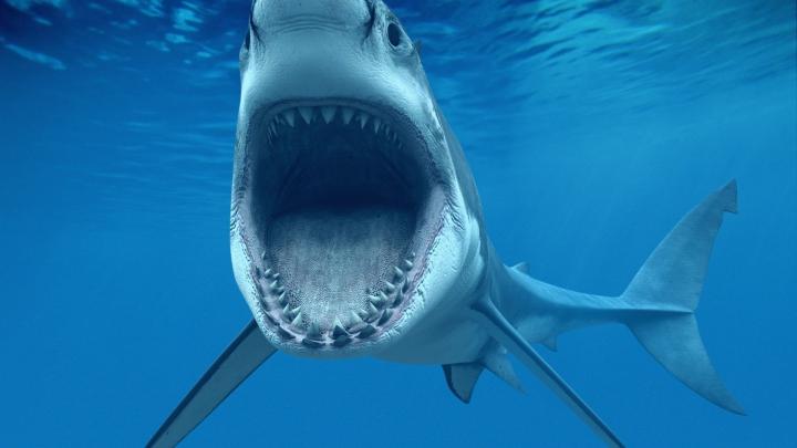 Caz şocant în Australia. Un adolescent care făcea surf, ucis de rechin