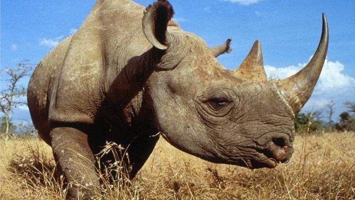 RAPORT: Populaţia de animale din pădurile lumii s-a redus la jumătate faţă de 1970