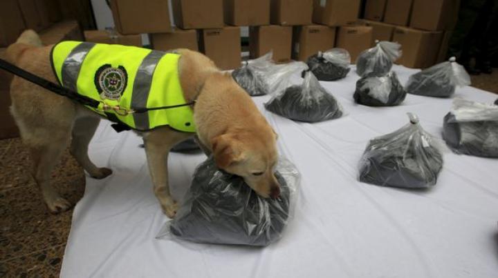 CAPTURĂ IMPRESIONANTĂ! Poliţiştii au găsit 540 de kilograme de cocaină într-un container