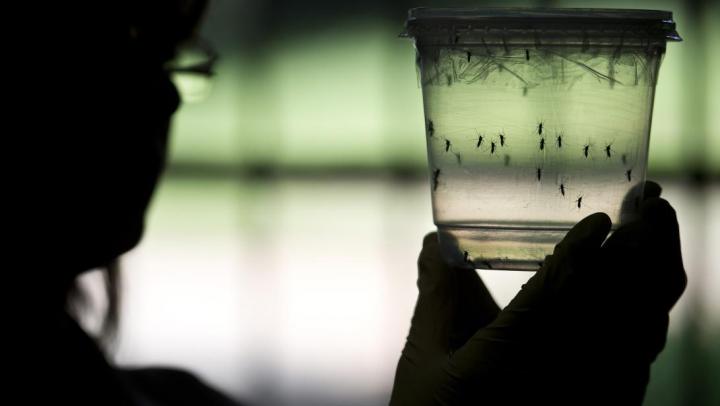 Virusul Zika. Florida a declarat stare de urgență sanitară după confirmarea a nouă cazuri de infectare