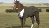 Primul cal căruia designerii i-au cusut costum şi şapcă (FOTO)
