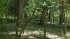 """""""NU VA MAI FI PERMIS în Moldova!"""" Ministerul Mediului vrea să interzică darea în arendă a pădurilor (FOTO)"""