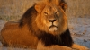 GREU DE CREZUT! O fetiță, salvată din mâinile unor necunoscuți de mai mulți lei