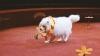 Cercetătorii au demontat mitul potrivit căruia un an din viaţa unui câine e echivalent cu şapte ani la om
