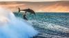 Surpriză pe cinste! Un delfin sălbatic i s-a alăturat unui surfer (VIDEO)