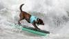 Amuzant! În Australia a fost organizat un concurs de surf pentru patrupezi (VIDEO)