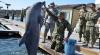 Armata rusă RECRUTEAZĂ delfini. Ce vor trebui să facă