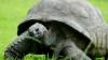 NO COMMENT! Cel mai bătrân viețuitor al planetei, o broască ţestoasă, face pentru prima dată baie