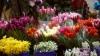 Multă agitaţie în serele de flori din nordul ţării. A venit luna care aduce VENITURI SUBSTANŢIALE