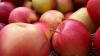 Iar corupţia e de vină. Ruta belarusă de export al merelor moldoveneşti în Rusia, ANIHILATĂ