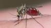 Ești curios? De ce țânțarii îi înțeapă pe unii oameni, iar pe alții nu