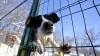 Gloria unui câine din Japonia. Patrupedul, invitat să asiste la ședința Cabinetului de Miniștri