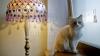 Întâmplare HALUCINANTĂ! O pisică a fost transmisă prin poștă la o distanță de 400 de kilometri